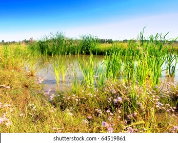 Wetlands - Marsh