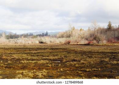 Wetlands marsh in winter