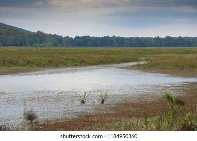 Wetlands and marshes are naturally beautiful and scenic. They swarm with birds, turtles, snakes, dragonflies and a seemingly endless array of living things.