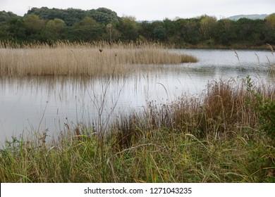 wetlands marshes water