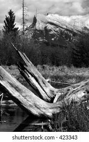 Wetlands & Mt. Rundle - Shutterstock ID 423343