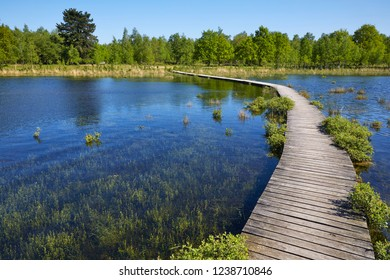 The wetlands of National Park and Estate 'Huis ter Heide' near the towns of 'Loon op Zand' and 'De Moer', province 'Noord-Brabant', the Netherlands