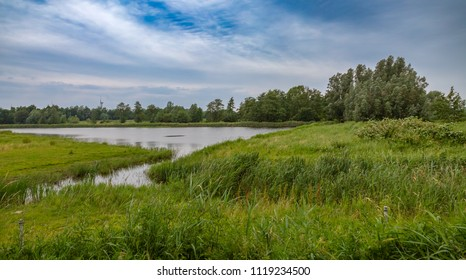 Wetlands nature Netherlands