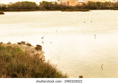 Wetlands of Santa Pola on a cloudy day of winter. Santa Pola in the background - Shutterstock ID 1983103022