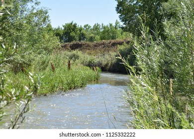 Wetlands stream in the sunlight