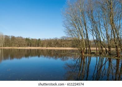 Wetlands swamp area