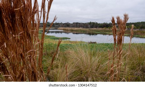 Wetlands at Sweetwater