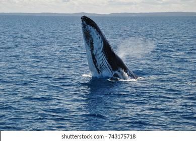 whale ?