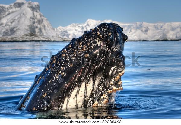 whale close to iceberg in Antarctica