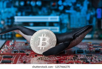 Whale figure holding silver Bitcoin on red intergrated circuit - as crypto whale holder concept