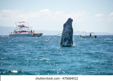Whale human watching