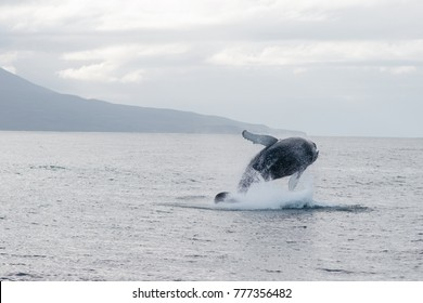 whale jump watching