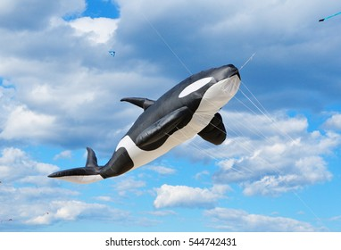 Whale Kite in Life Size with cloudy sky background shows at Bondi beach, Sydney, Australia.