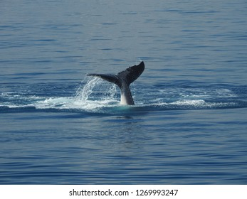 Whale on the ocean