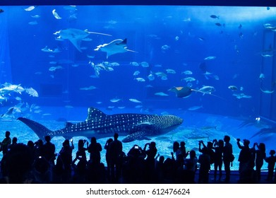 Whale shark and fishes in aquarium with spectators
