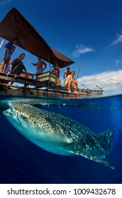 Whale Shark under Papuan fishing boat