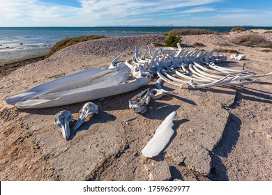 Whale skeleton and dolphin skulls on the ocean shore