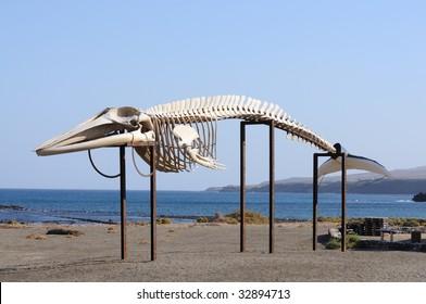 Whale skeleton on Canary Island Fuerteventura, Spain