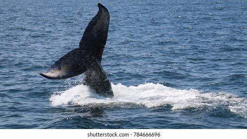 Whale Tail Breach