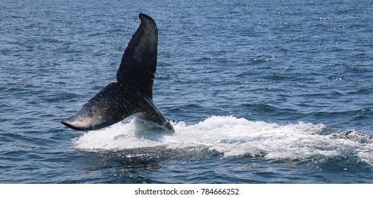 Whale Tail Hi
