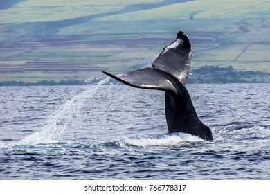 Whale Tail Over Ocean