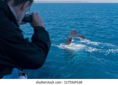 A whale watcher taking a photograph of the tail of a humpback whale in Platypus Bay, Hervey Bay Marine Park, Queensland, Australia.
