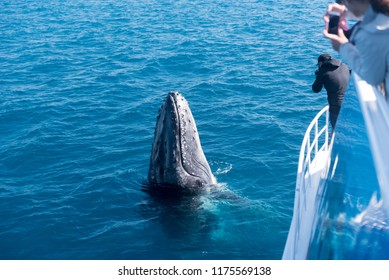 Whale watchers observing a humpback whale spyhopping in Platypus Bay, Hervey Bay Marine Park, Queensland, Australia.