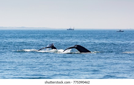 Whale watching in the atlantic ocean near Massachusetts.