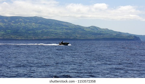 Whale watching in Azores