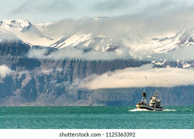 Whale Watching Boat in the Fjords of Husavik Iceland