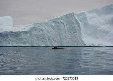 Whale watching in Ilulissat, Greenland