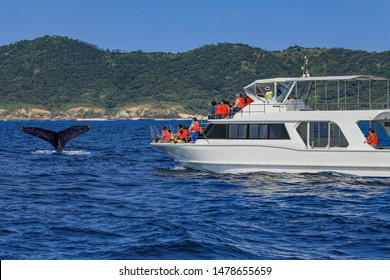 Whale watching Okinawa, Japan : 2019 January 10. You may even get a lovely sight of whales swimming with their calves during the tour. The Kerama waters around Tokashiki Island and Zamami Island.