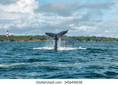 whale watching at pacific ocean