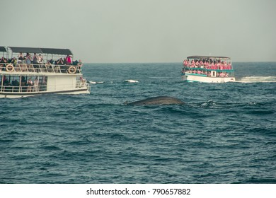 Whale watching tour. Wild blue whale swims in indian ocean. Wildlife nature background. Space for text. Adventure travel, tourism industry. Mirissa, Sri Lanka. Exploration concept. Tourist attraction