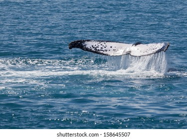 Whales stay for a while in Hervey Bay