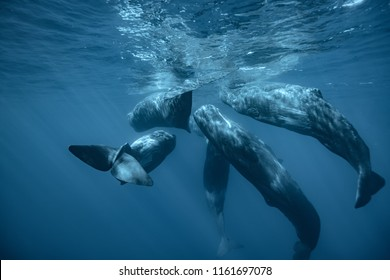Whales underwater in deep ocean water background