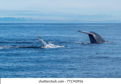 Whales Watching in Monterey Bay