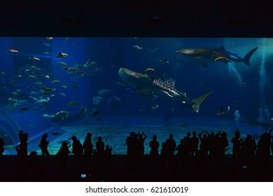 Whale-shark Tank