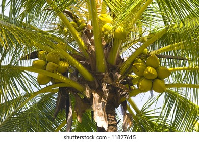 What a lovely bunch of coconuts