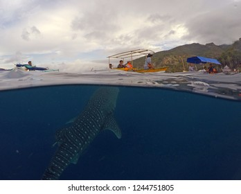 whatching whale shark in gorontalo. A tourist on vacation use traditional boat to whatcing a number giant whaleshark around the Botubarani beach, Gorontalo, Indonesia. Sunday (July 31, 2016).