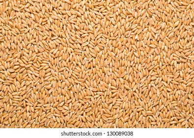 Wheat background view from the top