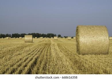 Wheat bale,Harvest