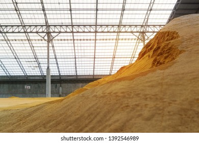 Wheat at Bulk Cargo Warehouse for animal feed industry.