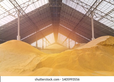 Wheat at bulk cargo warehouse storage for animal feed industry.