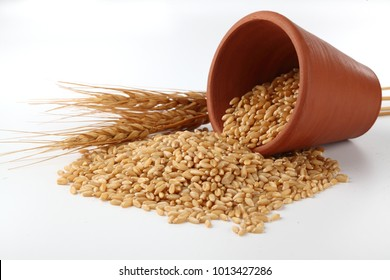 Wheat  Bunch of wheat ears, dried grains in terracota bowl on white background. Cereals harvesting, bakery products