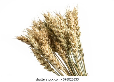 Wheat bunch isolated on white background. Grain bouquet. Golden spikelets.