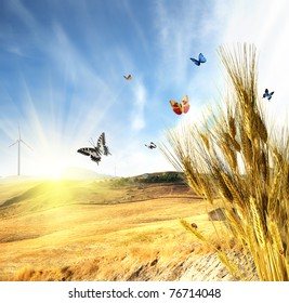 Wheat with butterfly and ladybug