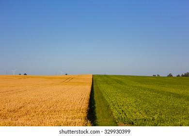 Wheat and cabbage field in Skane in southern Sweden