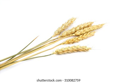 Wheat cereals isolated