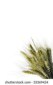 Wheat ear on the white background (isolated)